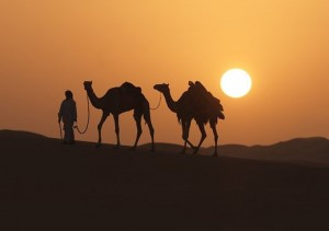 A man leads two camels across the desert in Dubai
