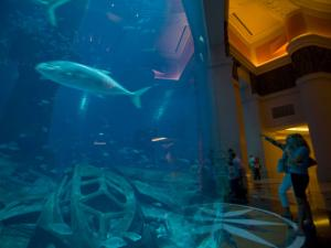 Tourists visit of a one of the Aquariums at the Atlantis hotel, the flagship resort on Dubai's man-made Palm Jumeirah Island